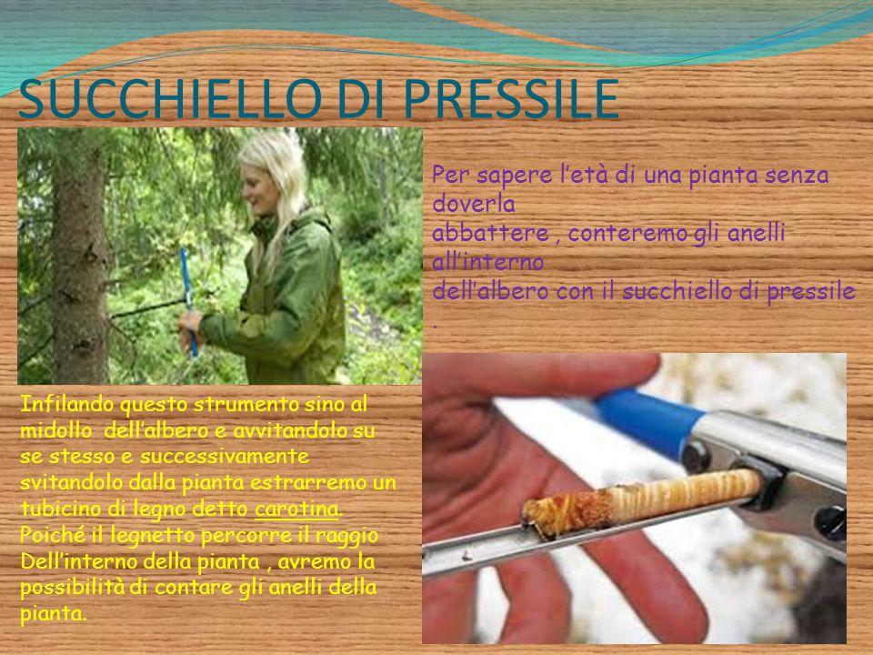 SUCCHIELLO DI PRESSILE