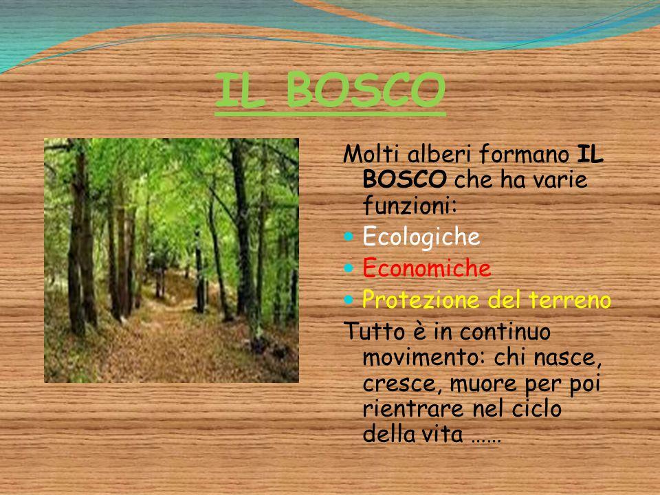 IL BOSCO Molti alberi formano IL BOSCO che ha varie funzioni: