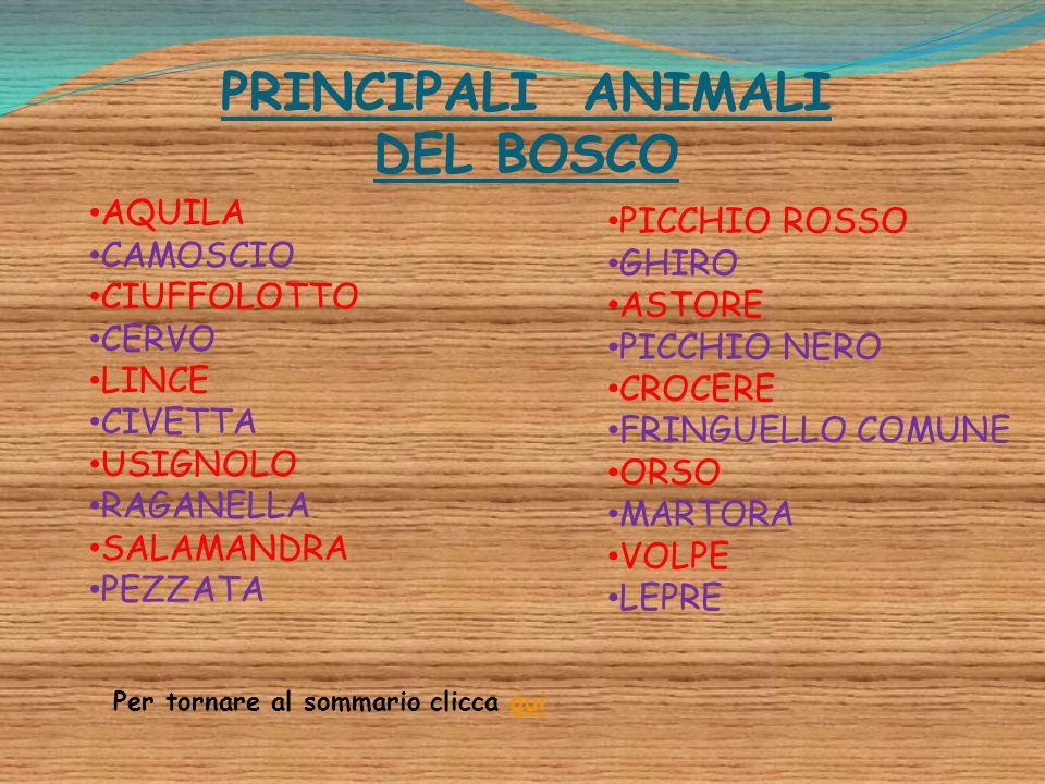 PRINCIPALI ANIMALI DEL BOSCO