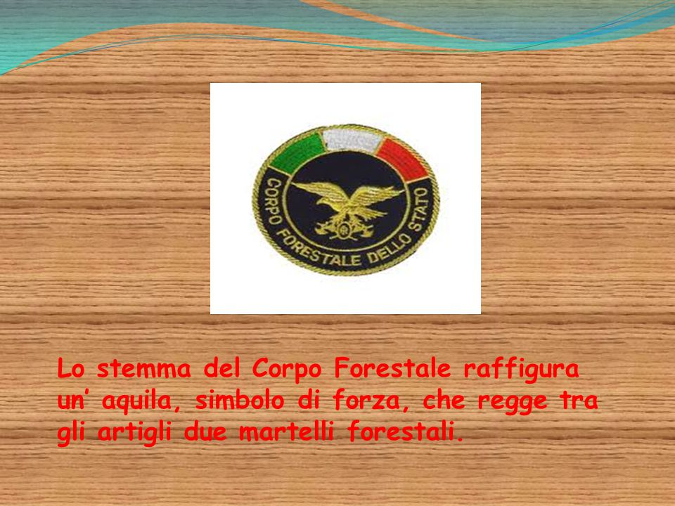 Lo stemma del Corpo Forestale raffigura un' aquila, simbolo di forza, che regge tra gli artigli due martelli forestali.