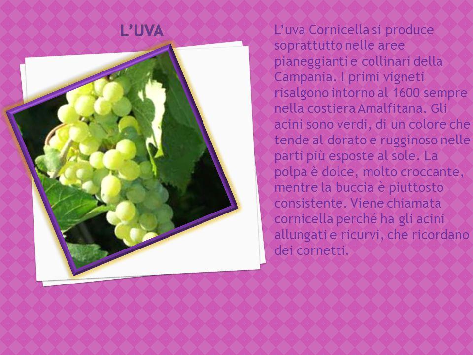 L'uva