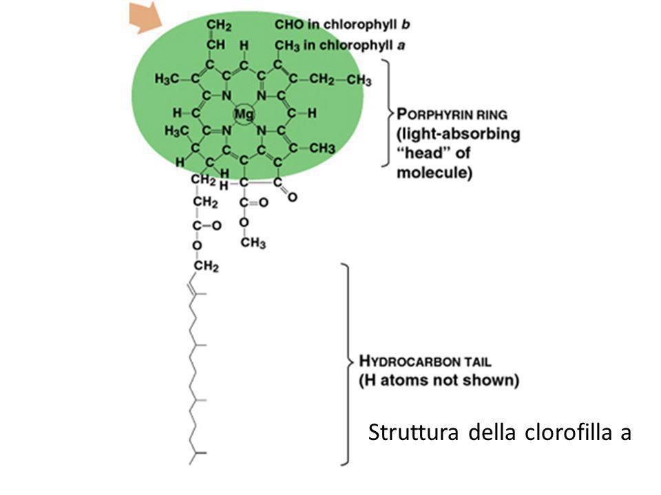 Struttura della clorofilla a