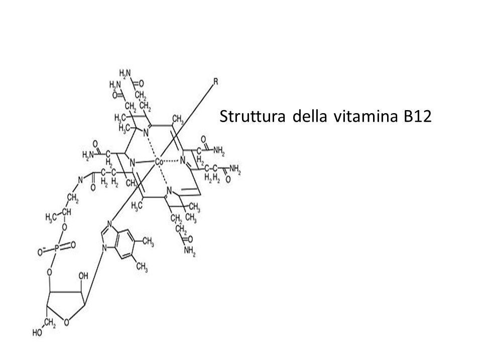 Struttura della vitamina B12