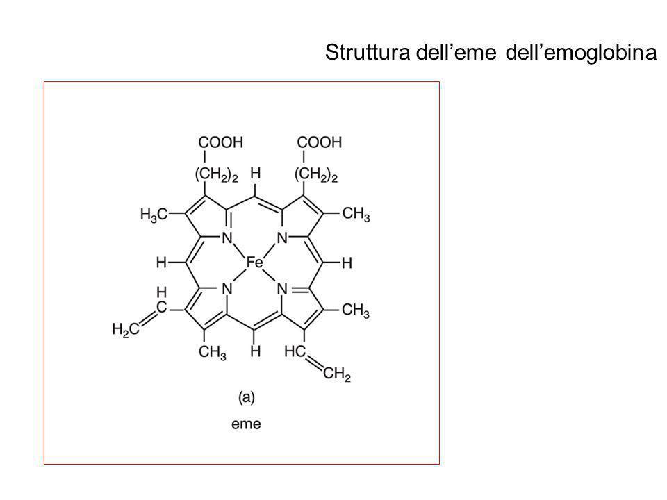 Struttura dell'eme dell'emoglobina
