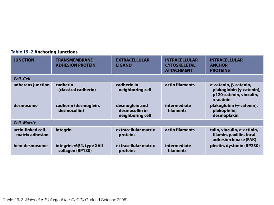 Table 19-2 Molecular Biology of the Cell (© Garland Science 2008)
