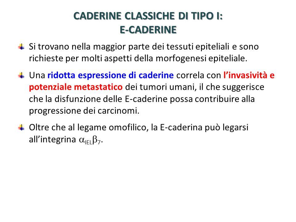 CADERINE CLASSICHE DI TIPO I: E-CADERINE