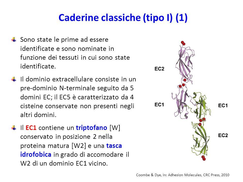 Caderine classiche (tipo I) (1)