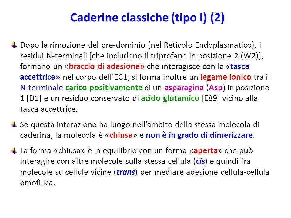 Caderine classiche (tipo I) (2)