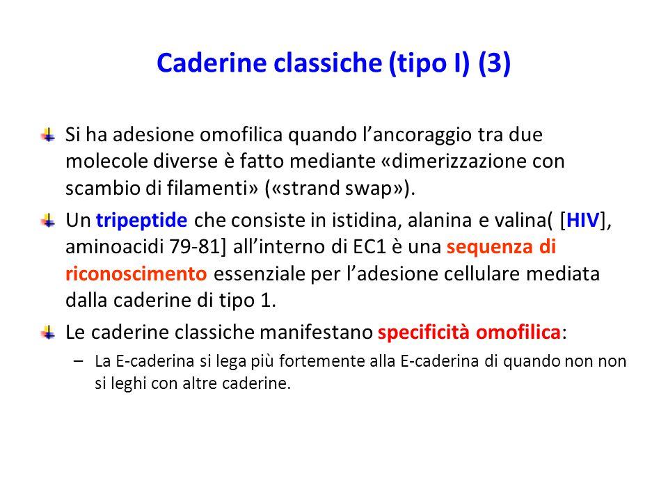 Caderine classiche (tipo I) (3)