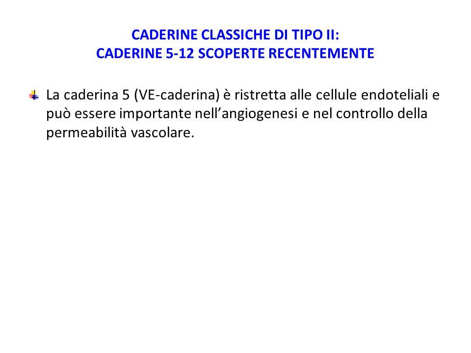 CADERINE CLASSICHE DI TIPO II: CADERINE 5-12 SCOPERTE RECENTEMENTE