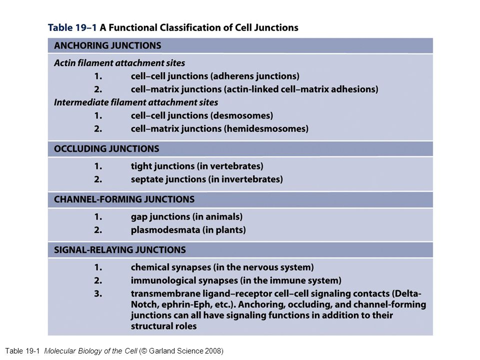Table 19-1 Molecular Biology of the Cell (© Garland Science 2008)