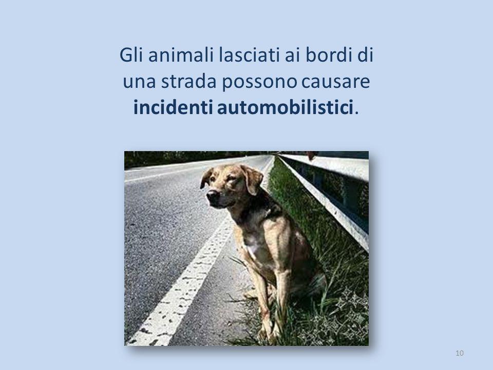 Gli animali lasciati ai bordi di una strada possono causare incidenti automobilistici.