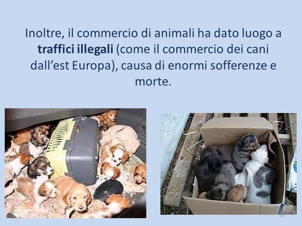 Inoltre, il commercio di animali ha dato luogo a traffici illegali (come il commercio dei cani dall'est Europa), causa di enormi sofferenze e morte.