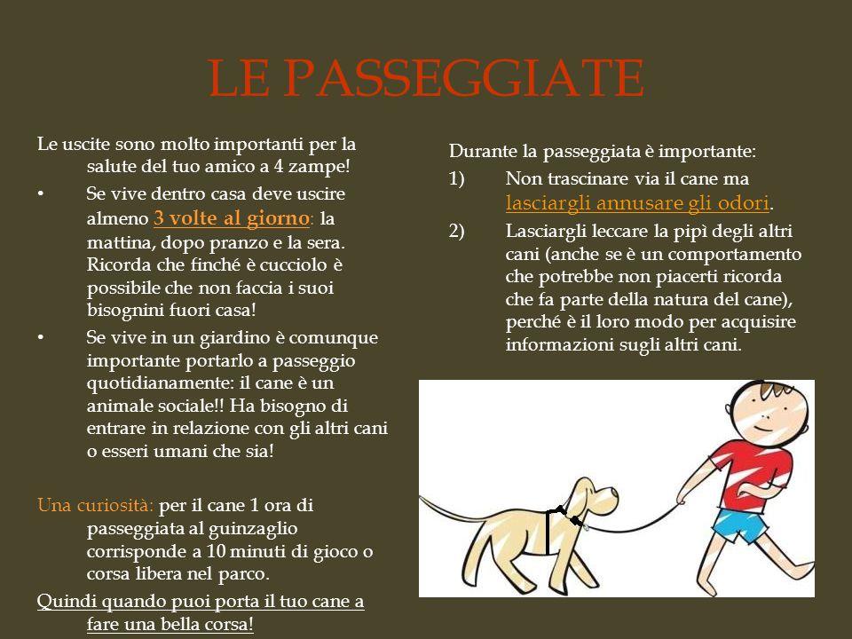Randagismo e adozione responsabile ppt video online for Casa progetta il trotto del cane