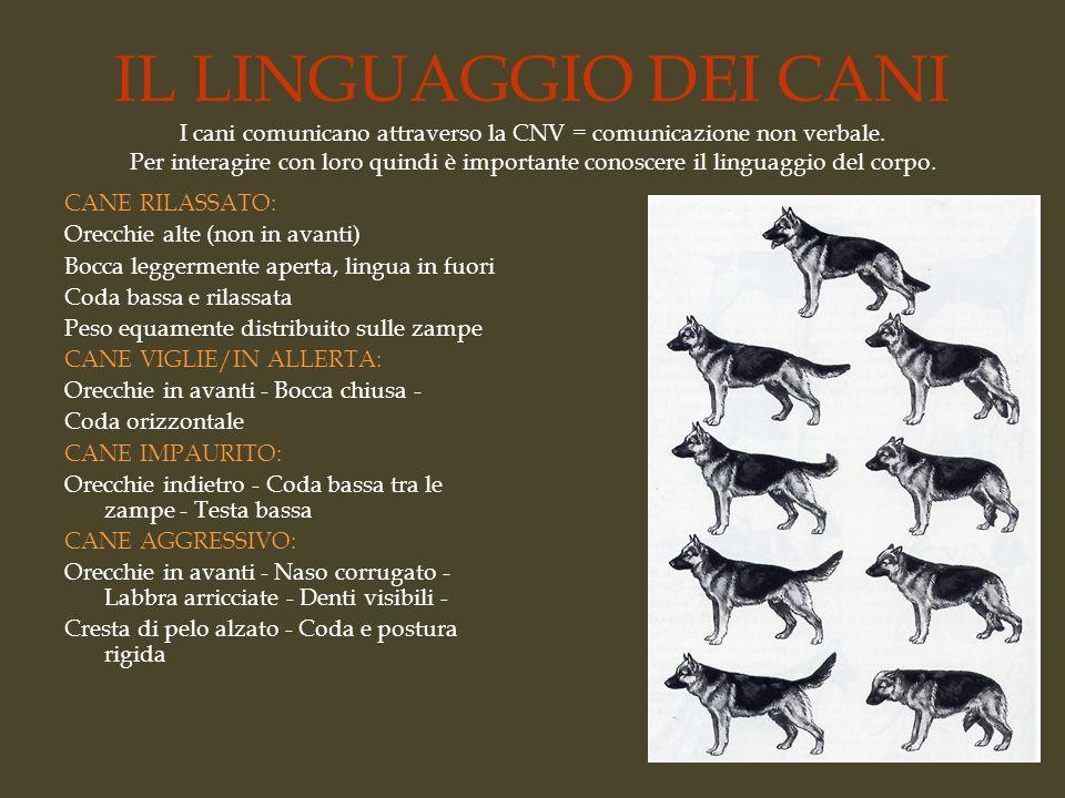 IL LINGUAGGIO DEI CANI I cani comunicano attraverso la CNV = comunicazione non verbale. Per interagire con loro quindi è importante conoscere il linguaggio del corpo.