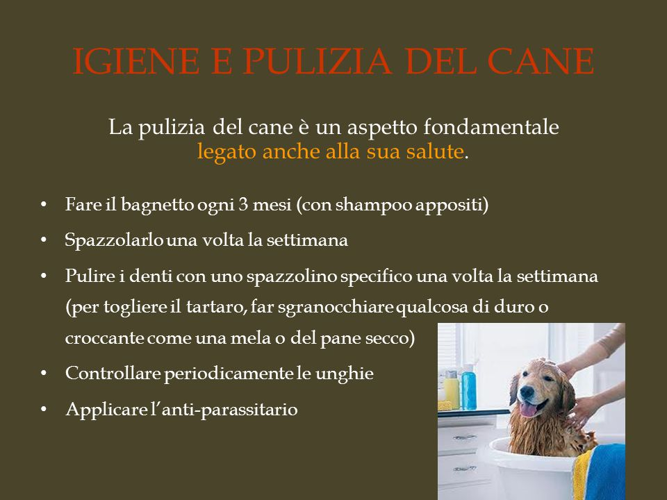 IGIENE E PULIZIA DEL CANE