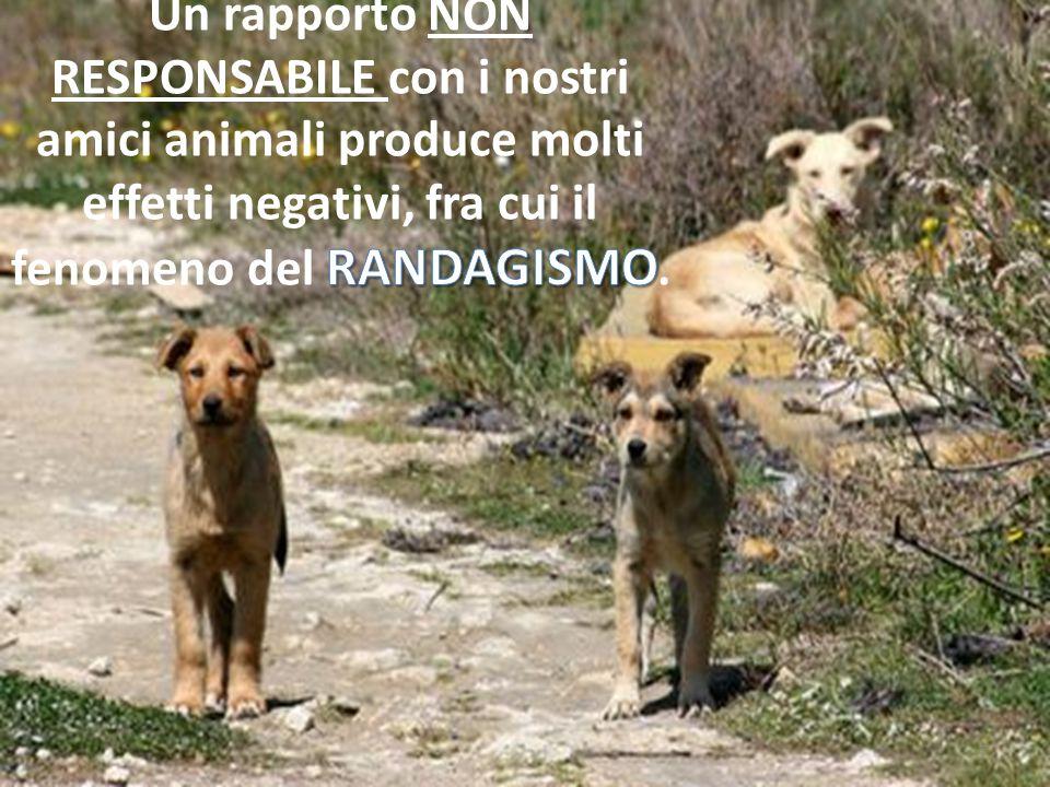 Un rapporto NON RESPONSABILE con i nostri amici animali produce molti effetti negativi, fra cui il fenomeno del RANDAGISMO.
