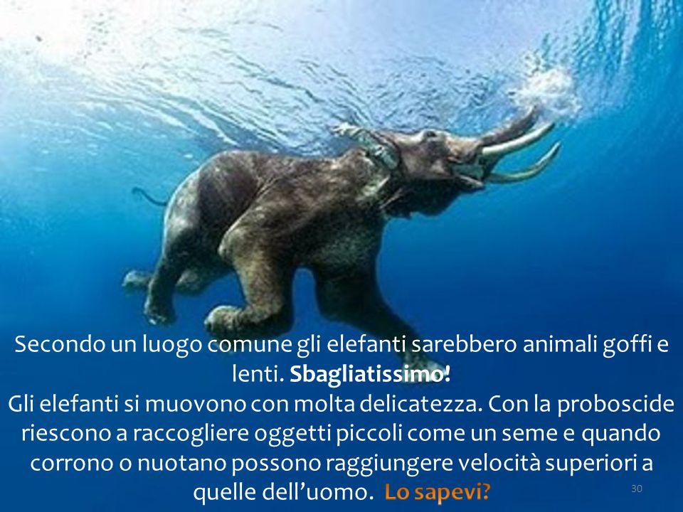 Secondo un luogo comune gli elefanti sarebbero animali goffi e lenti