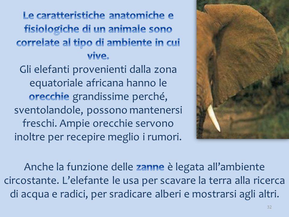 Le caratteristiche anatomiche e fisiologiche di un animale sono correlate al tipo di ambiente in cui vive.