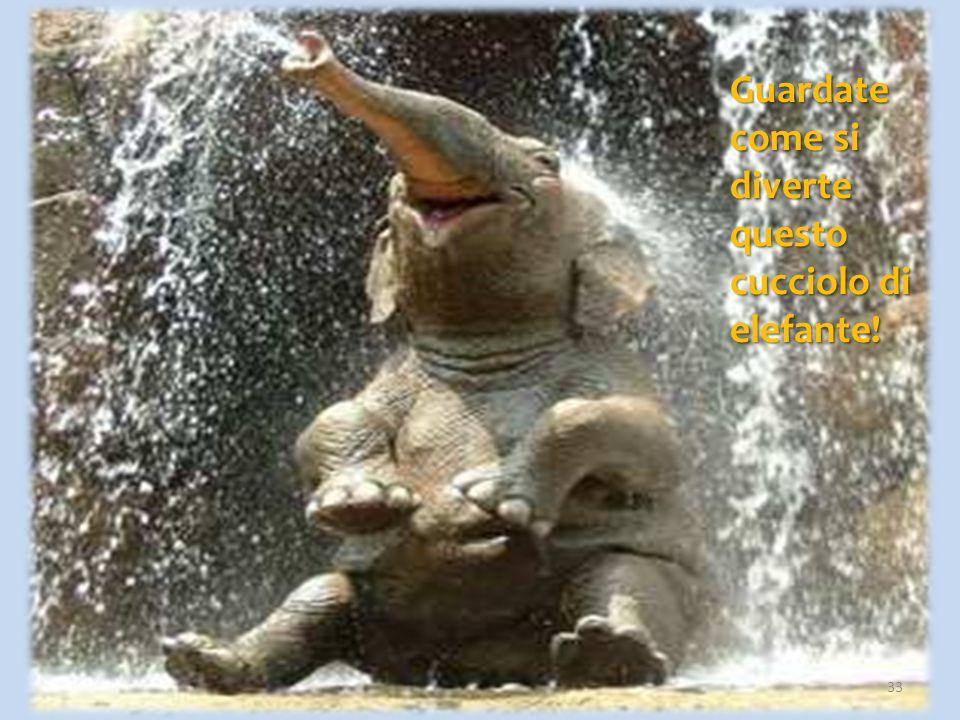 Guardate come si diverte questo cucciolo di elefante!