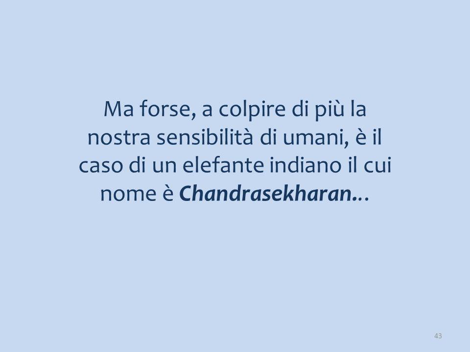 Ma forse, a colpire di più la nostra sensibilità di umani, è il caso di un elefante indiano il cui nome è Chandrasekharan...