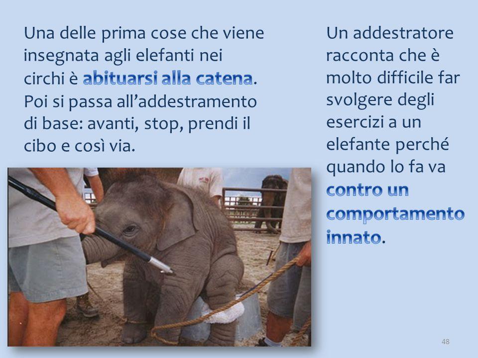 Una delle prima cose che viene insegnata agli elefanti nei circhi è abituarsi alla catena. Poi si passa all'addestramento di base: avanti, stop, prendi il cibo e così via.