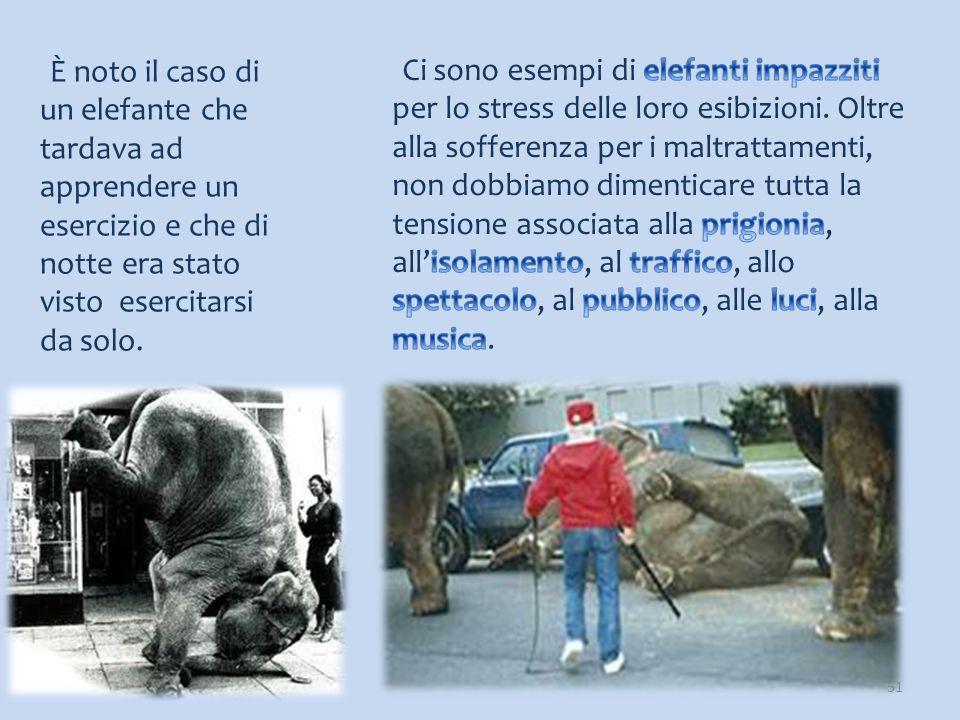 È noto il caso di un elefante che tardava ad apprendere un esercizio e che di notte era stato visto esercitarsi da solo.