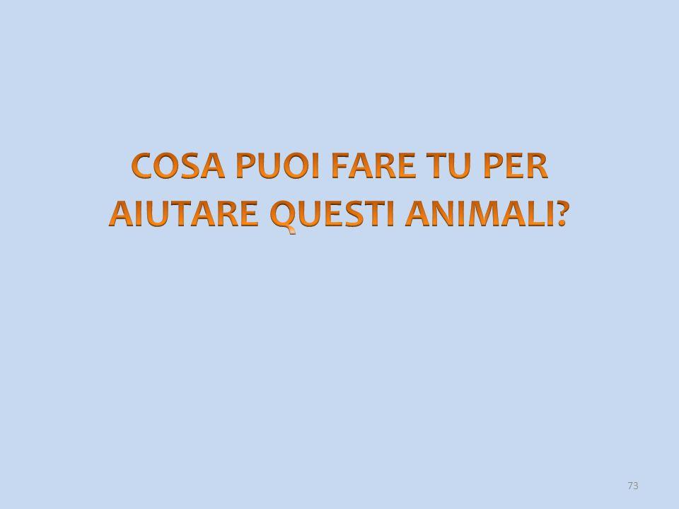 COSA PUOI FARE TU PER AIUTARE QUESTI ANIMALI
