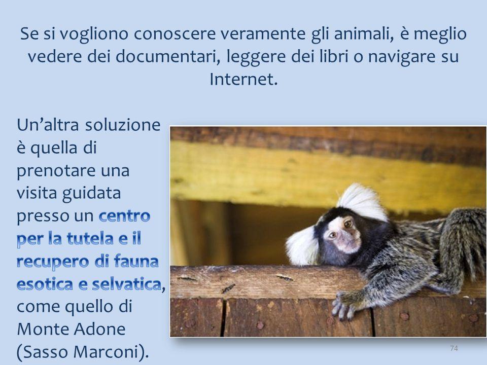 Se si vogliono conoscere veramente gli animali, è meglio vedere dei documentari, leggere dei libri o navigare su Internet.