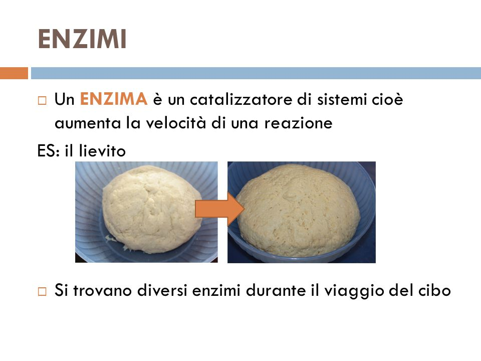 ENZIMI Un ENZIMA è un catalizzatore di sistemi cioè aumenta la velocità di una reazione. ES: il lievito.