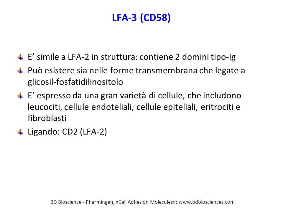 LFA-3 (CD58) E' simile a LFA-2 in struttura: contiene 2 domini tipo-Ig