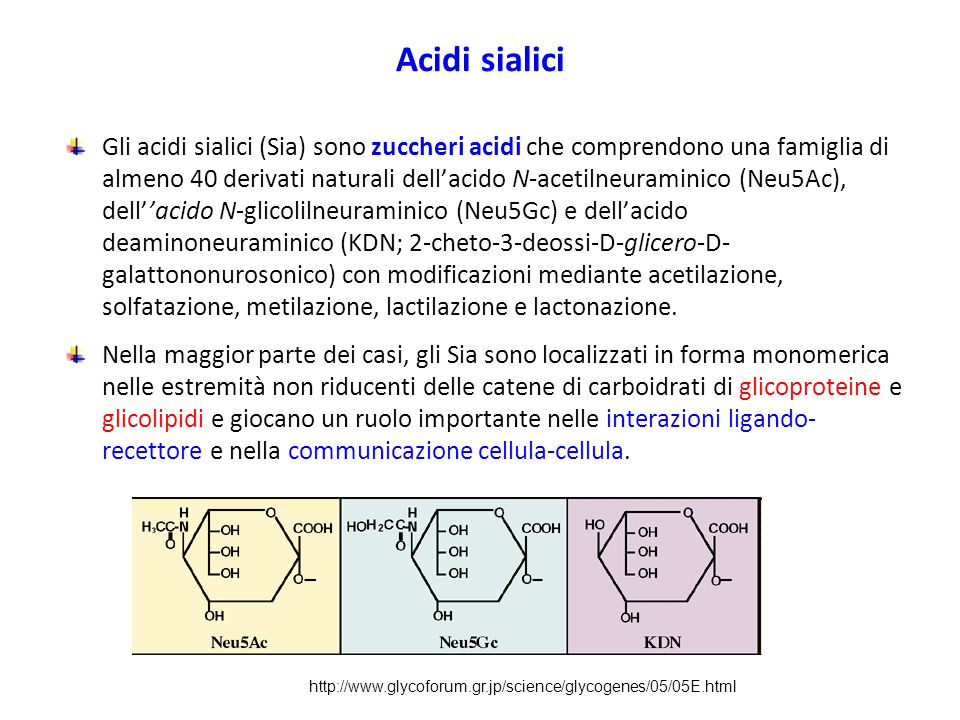 Acidi sialici