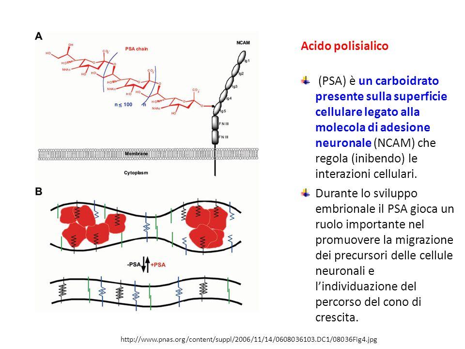 Acido polisialico