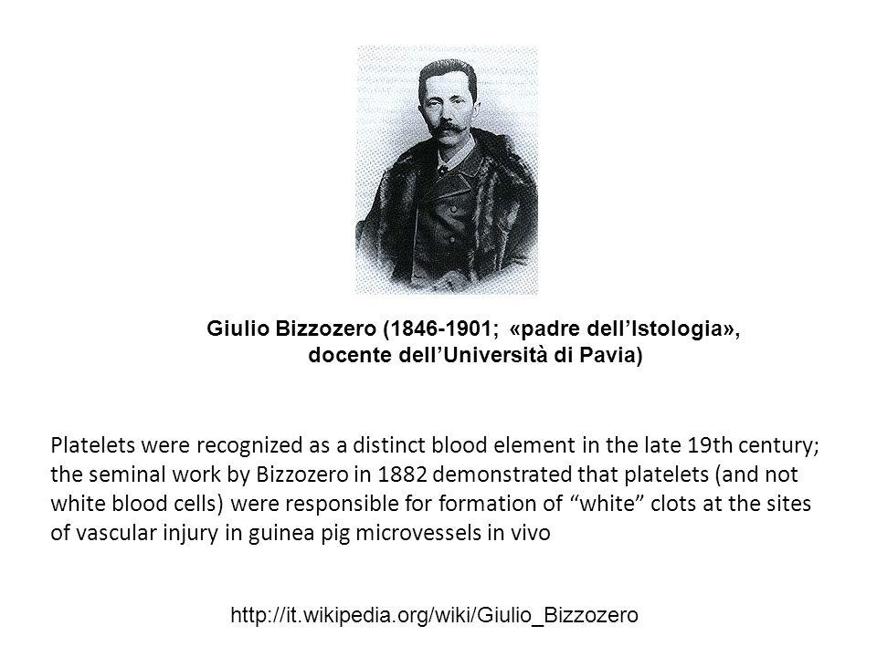 Giulio Bizzozero (1846-1901; «padre dell'Istologia», docente dell'Università di Pavia)