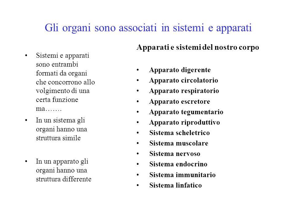 Gli organi sono associati in sistemi e apparati