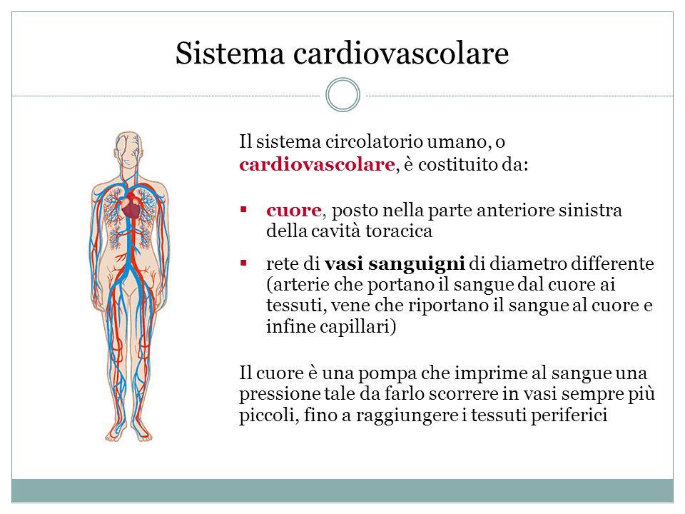 Sistema cardiovascolare