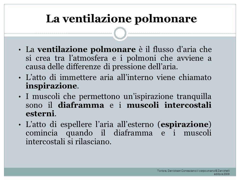 La ventilazione polmonare