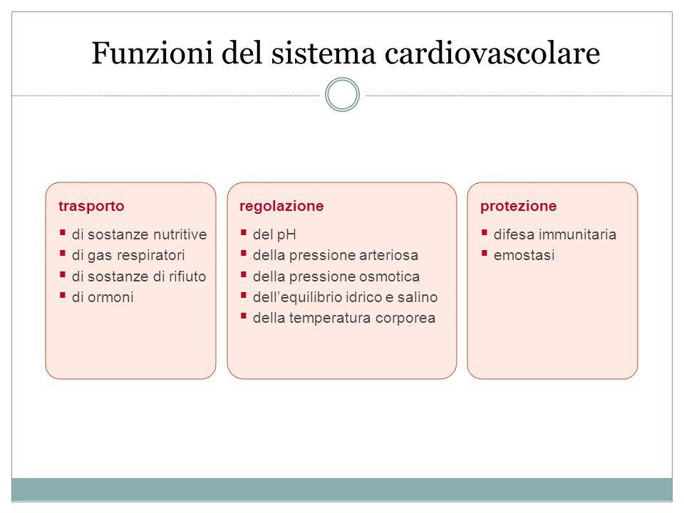 Funzioni del sistema cardiovascolare