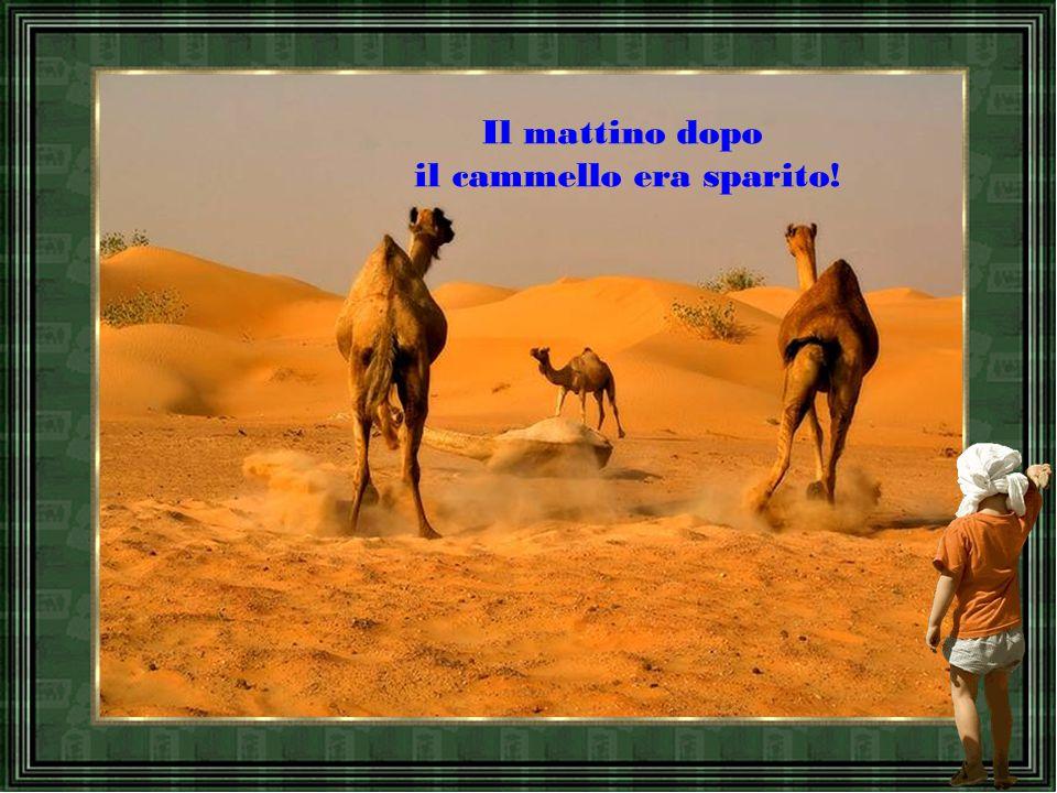 il cammello era sparito!