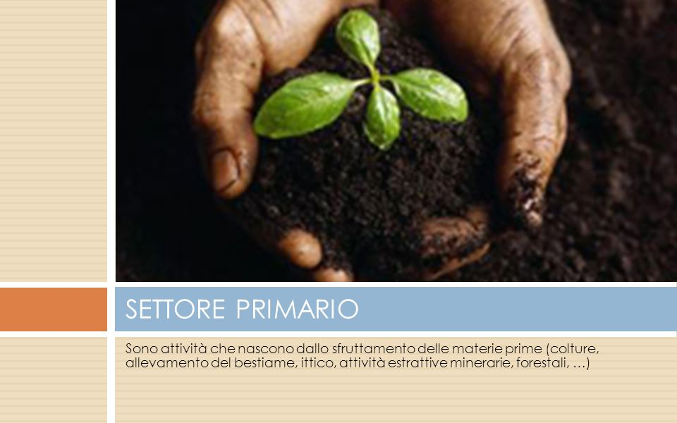 SETTORE PRIMARIO
