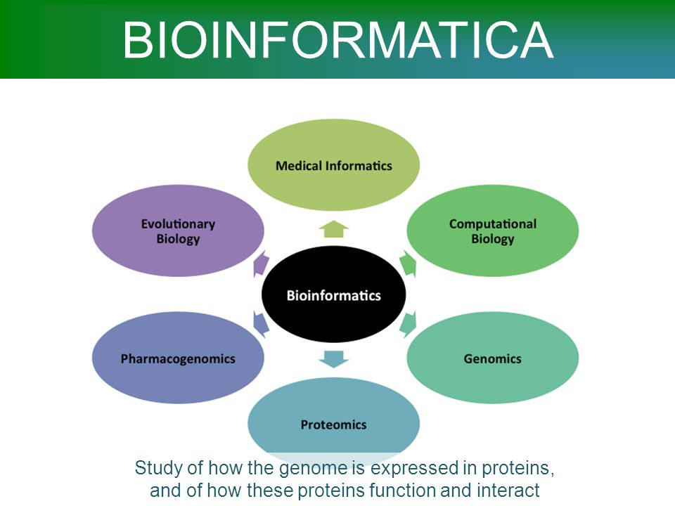 BIOINFORMATICA Study of how the genome is expressed in proteins, and of how these proteins function and interact.