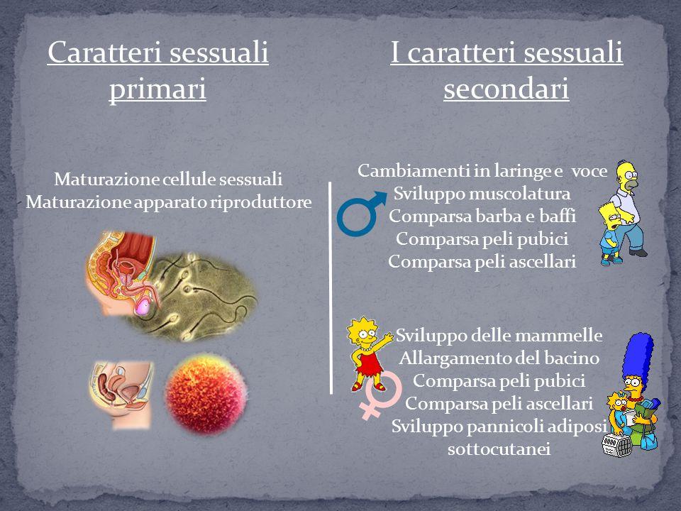 Caratteri sessuali primari I caratteri sessuali secondari