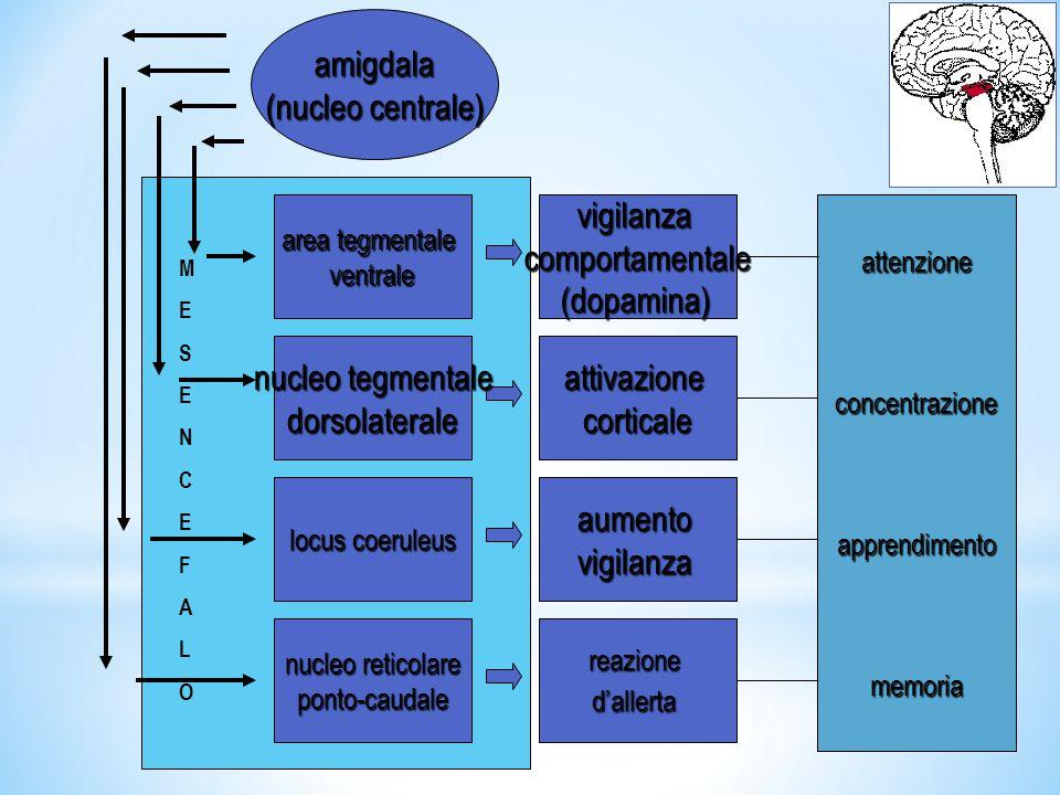 amigdala (nucleo centrale) vigilanza comportamentale (dopamina)