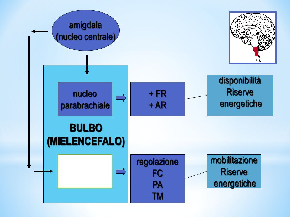 BULBO (MIELENCEFALO) amigdala (nucleo centrale) disponibilità Riserve