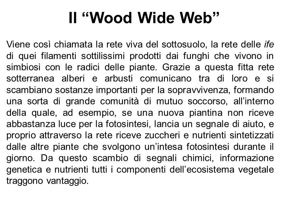 Il Wood Wide Web