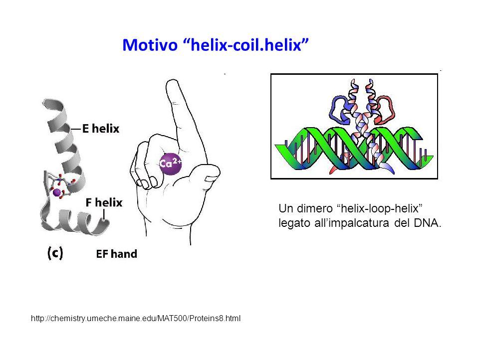 Motivo helix-coil.helix