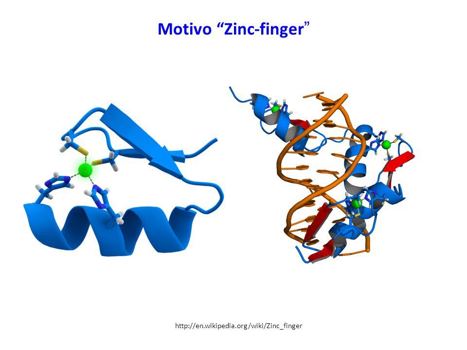 Motivo Zinc-finger http://en.wikipedia.org/wiki/Zinc_finger