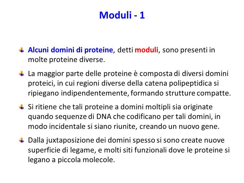 Moduli - 1 Alcuni domini di proteine, detti moduli, sono presenti in molte proteine diverse.