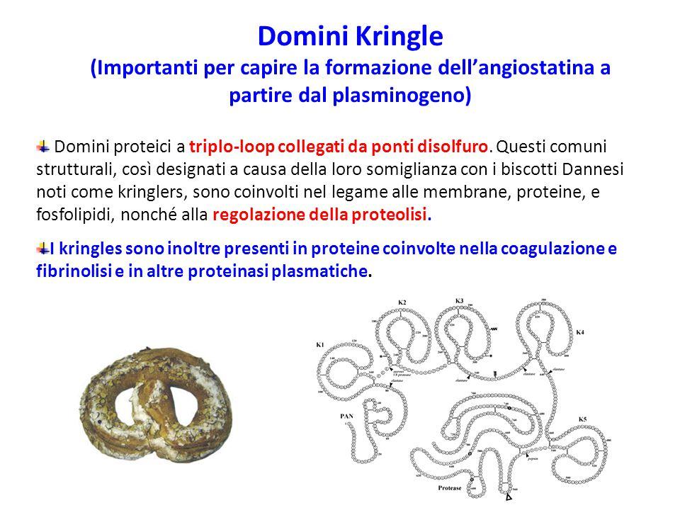 Domini Kringle (Importanti per capire la formazione dell'angiostatina a partire dal plasminogeno)