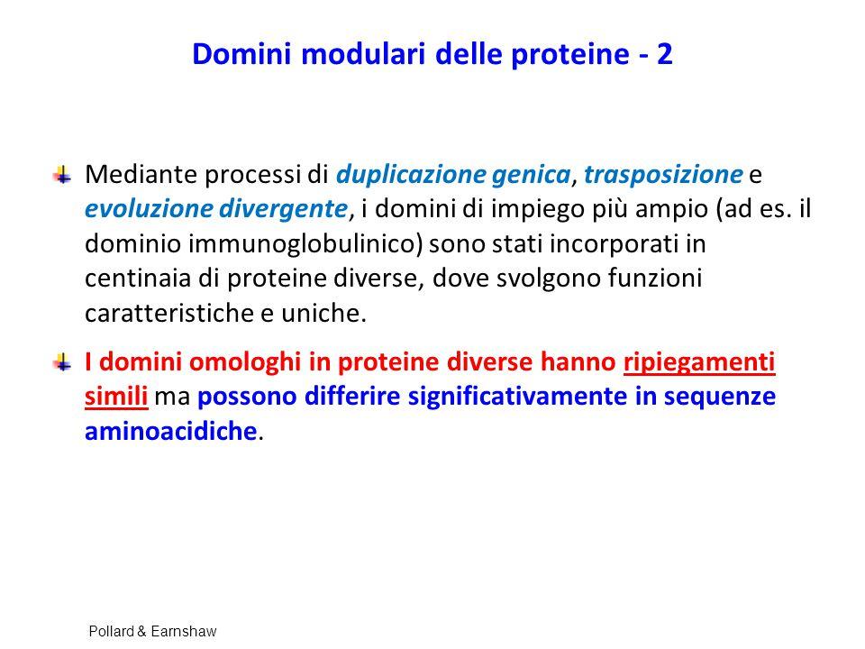 Domini modulari delle proteine - 2